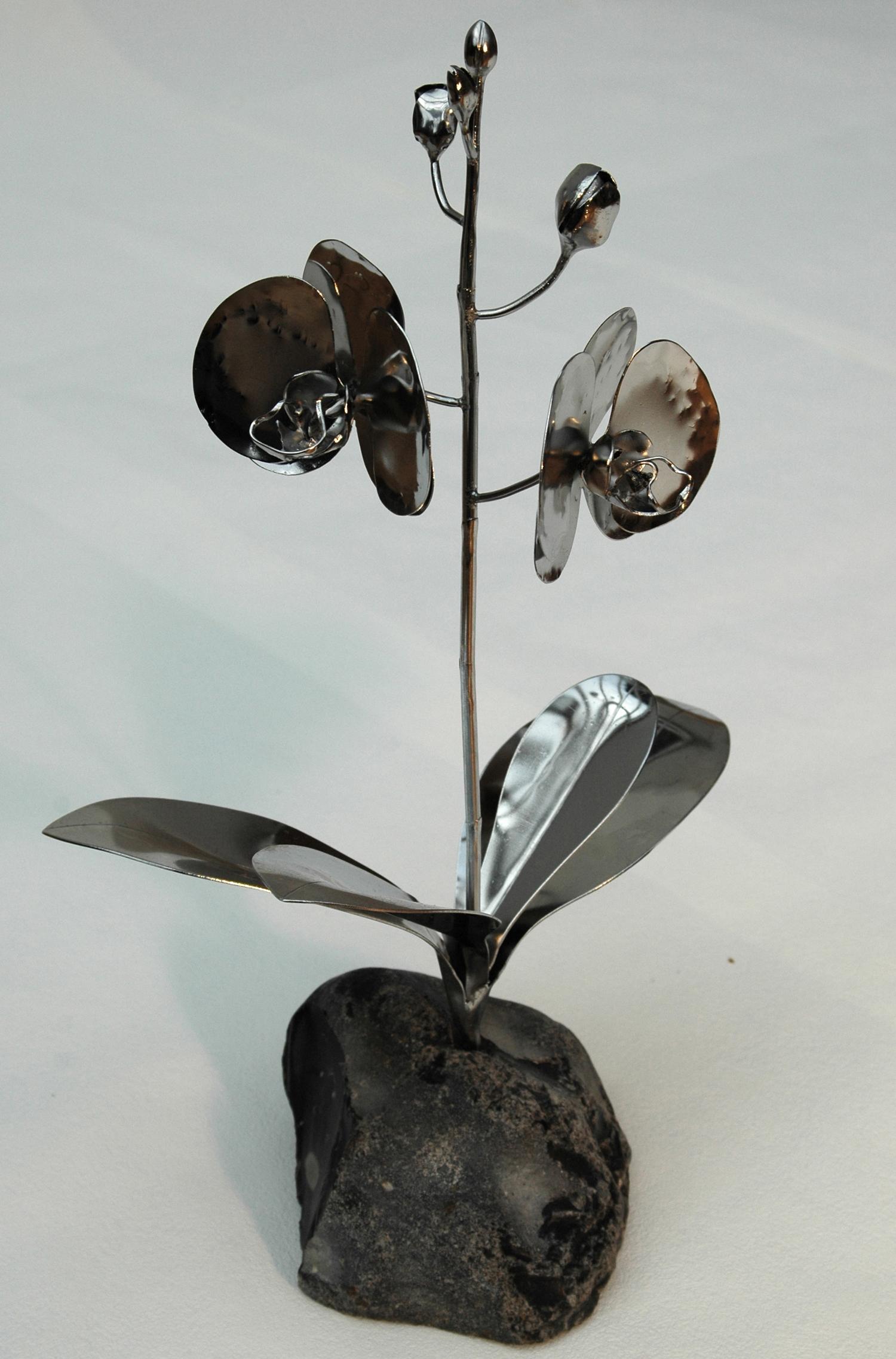 Phalaenopsis_02