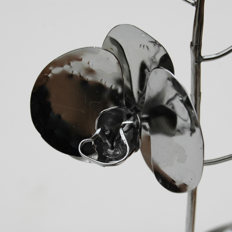 Phalaenopsis_06