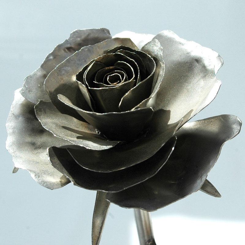Rose_matt_01