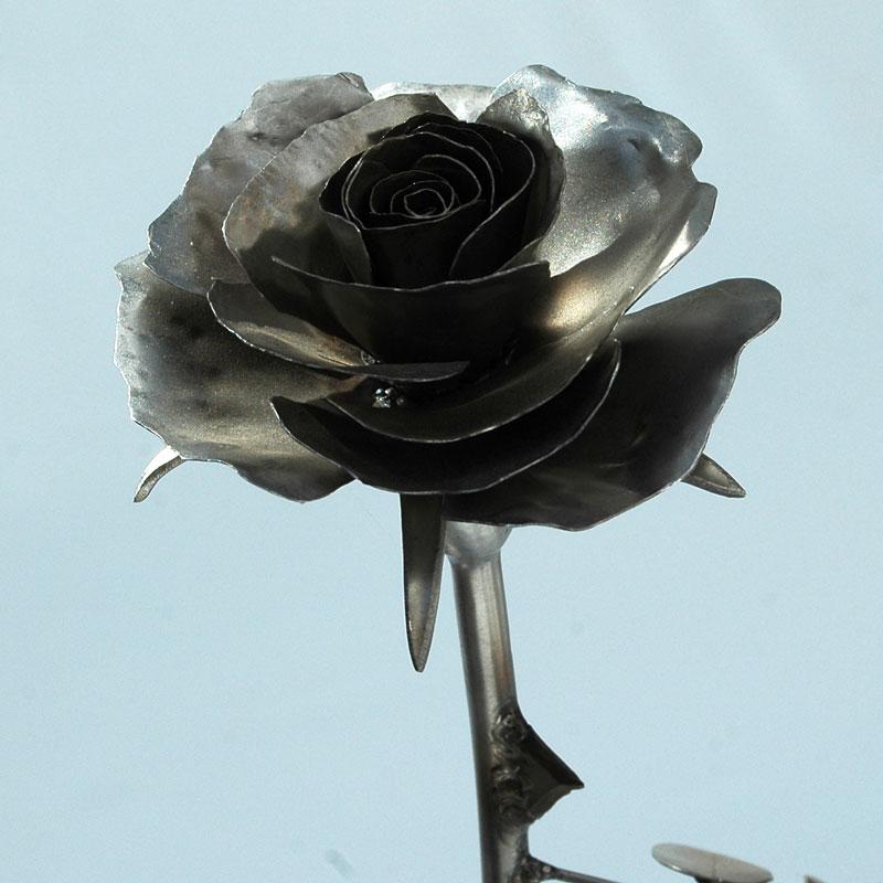 Rose_matt_08