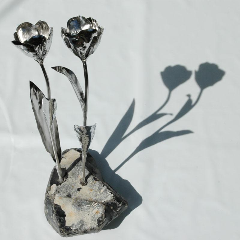 Tulpen (11)