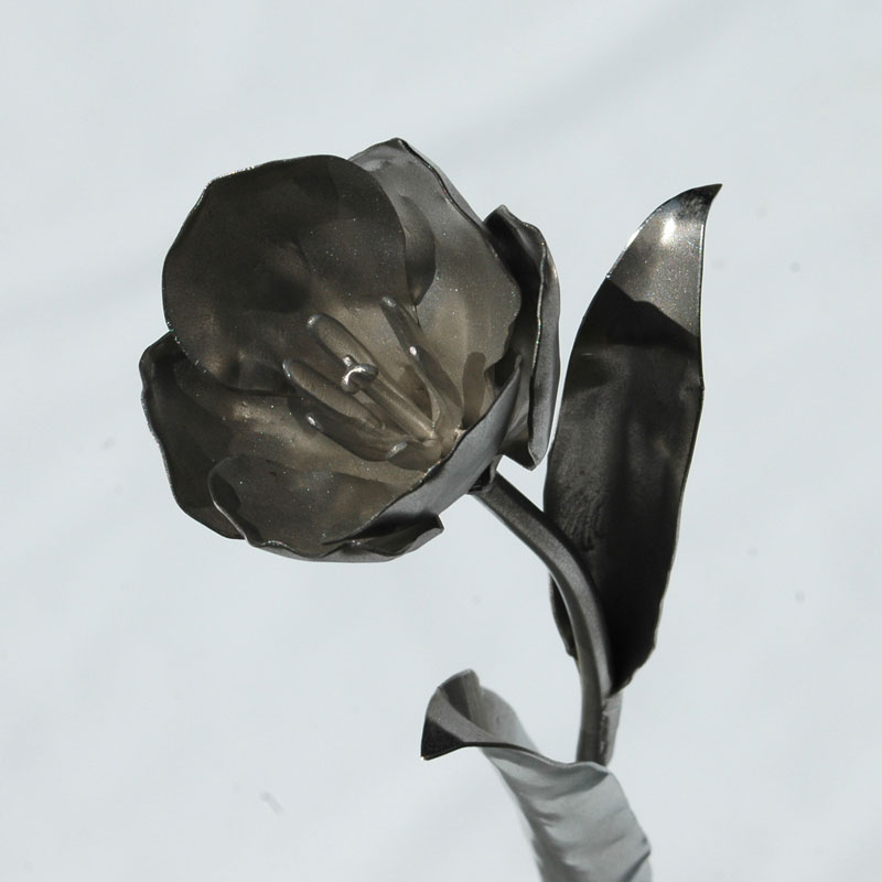 Tulpen (16)