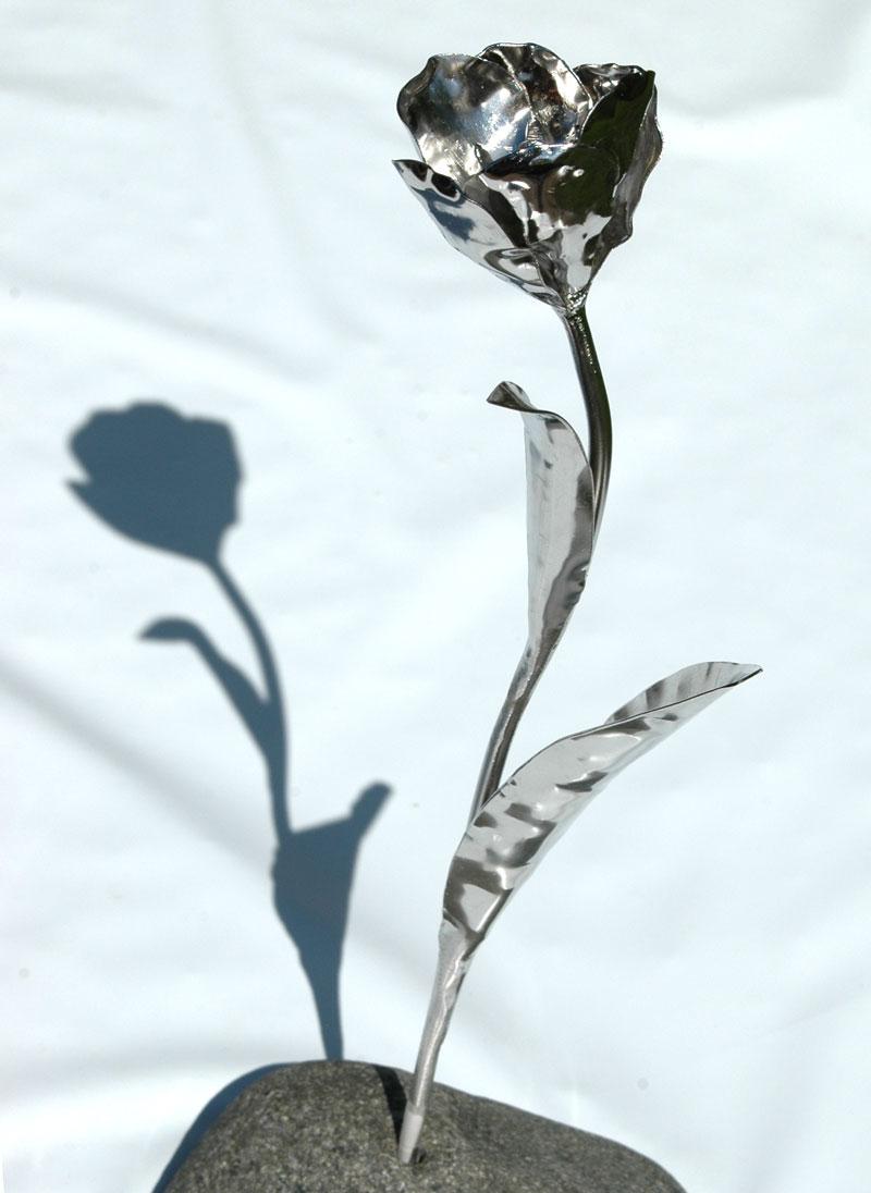 Tulpen (22)